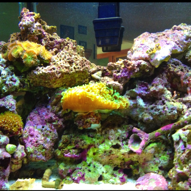 Exceptional Saltwater Tank With Corals.