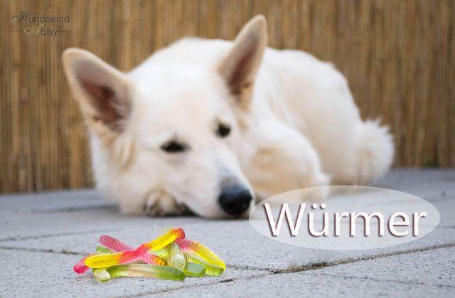 Darum Sind Wurmkuren Nicht Immer Sinvoll Hunde Wurmer Beim
