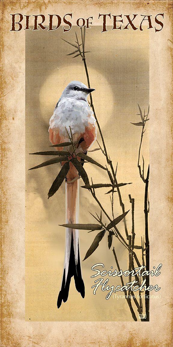 Birds of Texas Scissortail Flycatcher. One of my favorite birds.