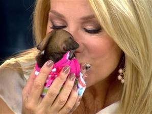 KLG gives the world's smallest puppy a kiss!!!
