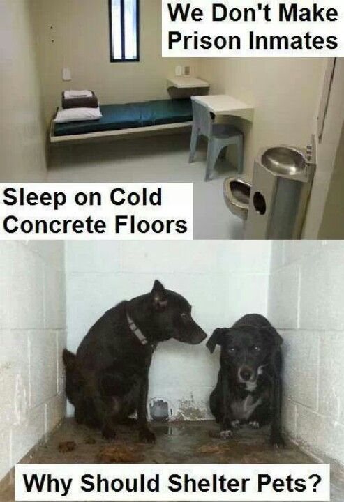 Agreed/ It's despicable they sleep on cold hard concrete ...