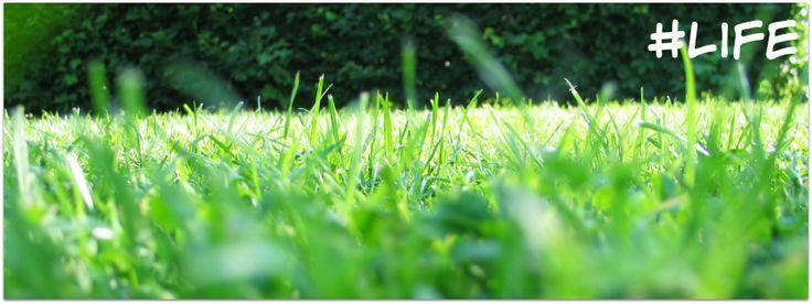 #life green grass