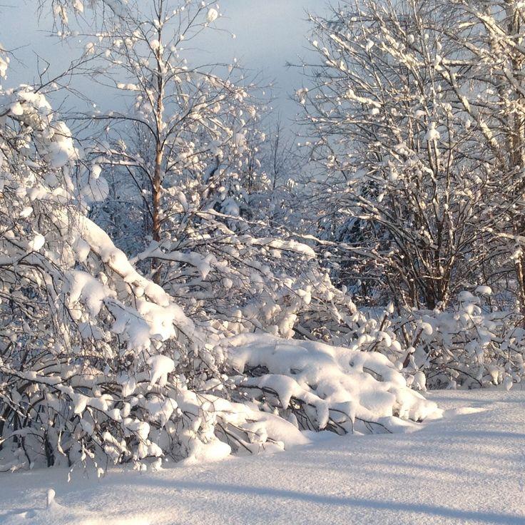 My Lapland