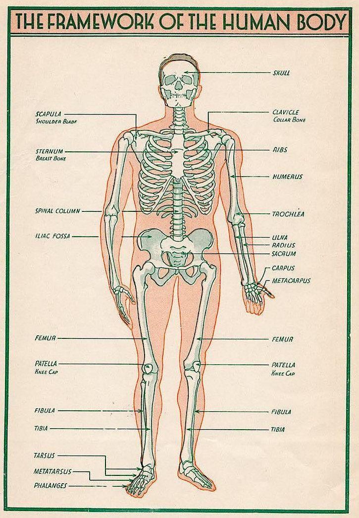 338 besten ♚ HELPING AN ACHING BODY ♚ Bilder auf Pinterest ...