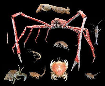 Natura prin fiinta: Crustacee