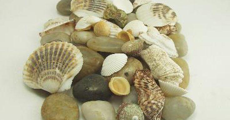 Como usar conchas marinhas na decoração de um quadro. Conchas podem adicionar um toque original a um quadro ou moldura de espelho. O resultado final ainda permitirá que você mantenha uma parte do oceano em sua casa.
