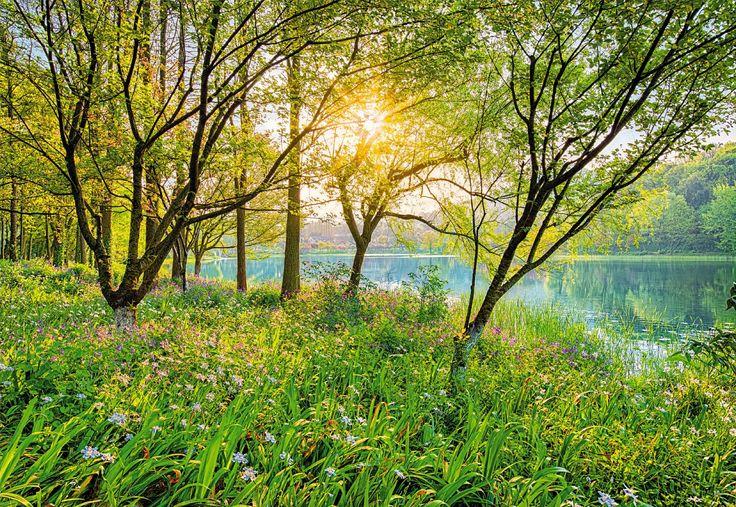 De flores púrpuras suaves y follaje verde brillante invitar a quedarse en el lago. Contacta con nosotros al 951 081 159, vía email info@bricotiendas.com o visita nuestra tienda especializada en papeles pintados www.papeles-pintados.es.