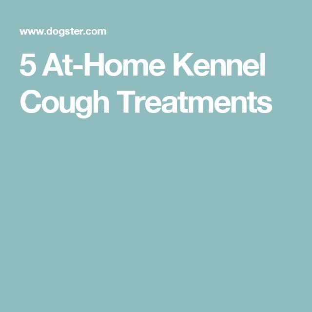 5 At-Home Kennel Cough Treatments