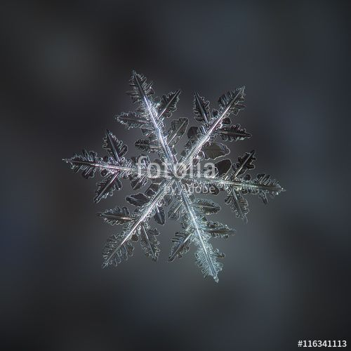"""Download the royalty-free photo """"Snowflake on dark grey backdrop: macro photo of real snow crystal on woolen fabric in natural light. Background digitally blurred. This is very large fernlike dendrite snowflake."""" created by Alexey Kljatov at the lowest price on Fotolia.com. Browse our cheap image bank online to find the perfect stock photo for your marketing projects!"""