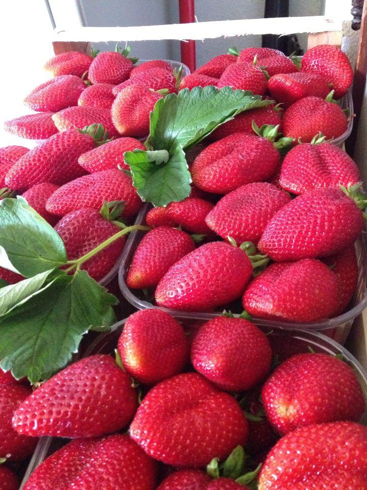 #fragola #candonga top quality prodotta a #policoro in #Basilicata