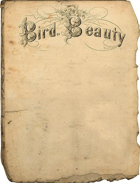 free vintage printable bird beauty