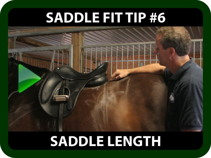 "Schleese Saddle Fit Tip #6 Saddle Length  Ask yourself...  Does your horse have a ""4-beat"" canter?   Does your horse have tense back muscles with impaired movement?  If you answered ""yes"" to the above question, you may be faced with a Saddle Length issue. Watch this informative video for some saddle fit tips on ""Saddle Length"" and learn how improper saddle length may be the cause!  https://youtu.be/3ei4nv-ltSA?list=PLA35A02DBF310BB9D"