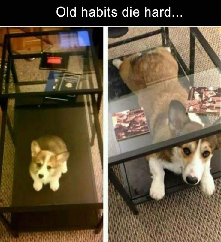 70 Funny Pics for Your Tuesday