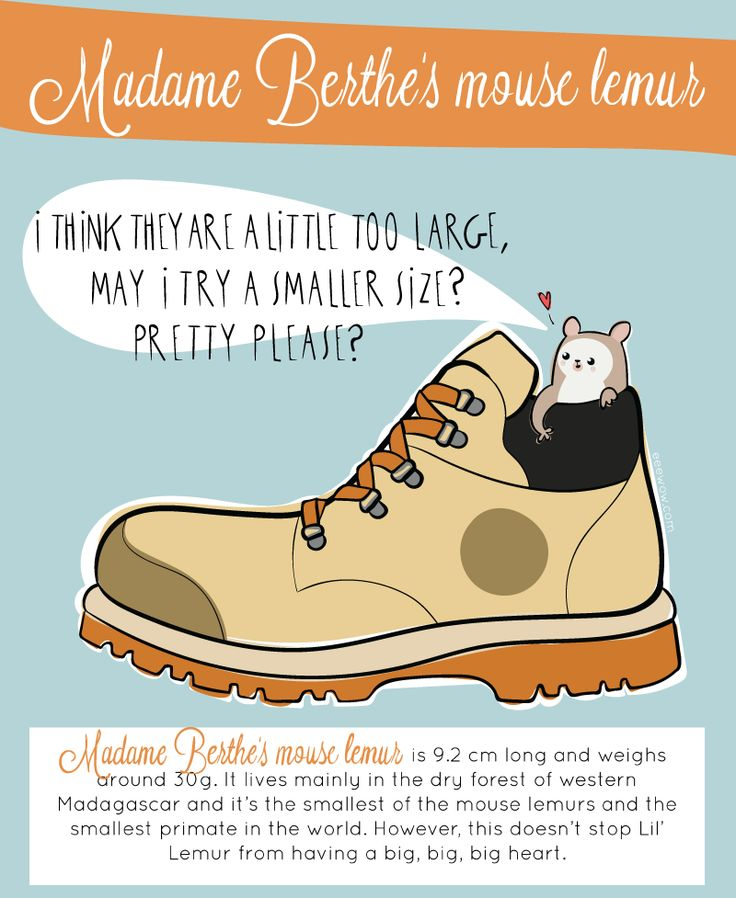 WOW #002: Madame Berthe's mouse lemur