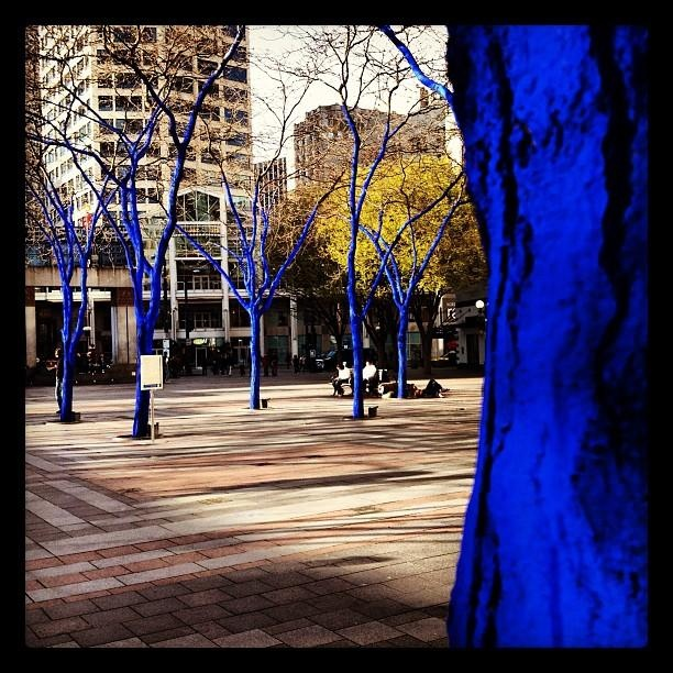 The blue trees of Westlake Park.: Seatown Swag, Emeralds Cities, Seattle, Westlak Parks, Blue Trees, Future Plans, Washington States, Brilliant Shades, Pacific Northwest