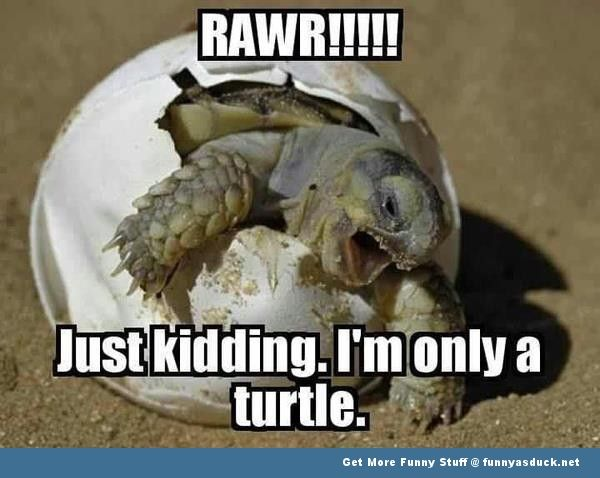 funny-turtle-pictures-with-words | Funny Pictures tumblr quotes ...
