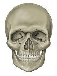 Aan de rechterzijde van mijn hoofd wil ik graag een skelet maken door het andere deel op te hogen met klei en dit op vlees te laten lijken.