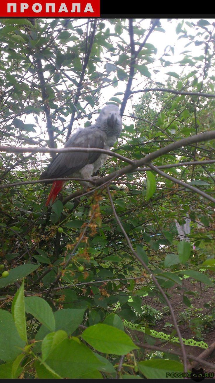 Пропал попугай жако г.Ярославль http://poiskzoo.ru/board/read26834.html  POISKZOO.RU/26834 .. июля ..г улетел попугай Жако серый с красным хвостиком, зовут Сеня. Пожалуйста помогите нам его найти. ВОЗНАГРАЖДЕНИЕ ГАРАНТИРУЕМ! ... в любое время дня и ночи.   РЕПОСТ! @POISKZOO2 #POISKZOO.RU #Пропал #попугай #Ярославль