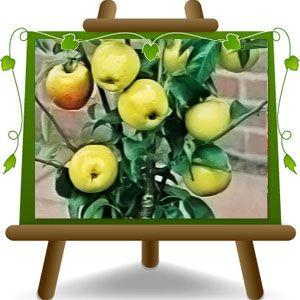 oltre 25 fantastiche idee su piante in vaso su pinterest