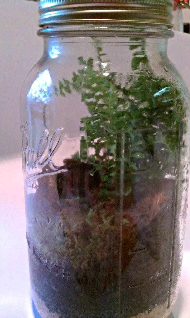 Make mason jar biospheres classroom pinterest jars mason jars and plants - Stemmed mason jars ...