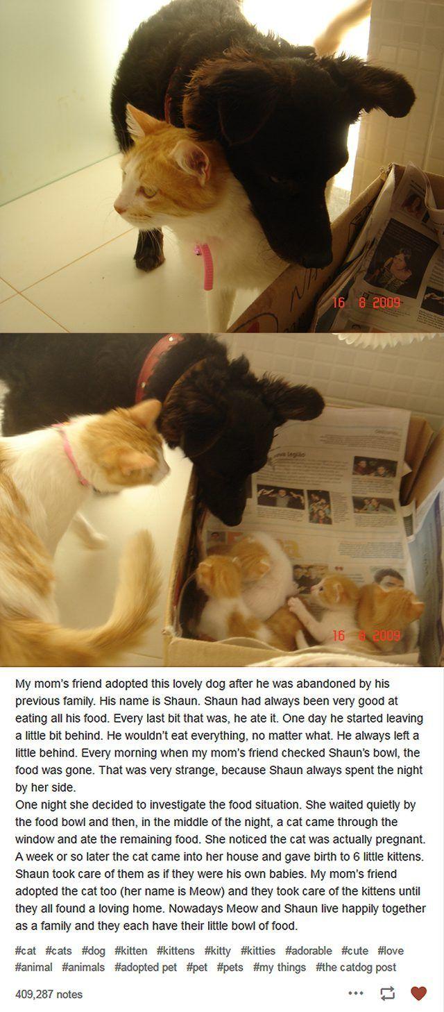 Dog and cat raising kittens
