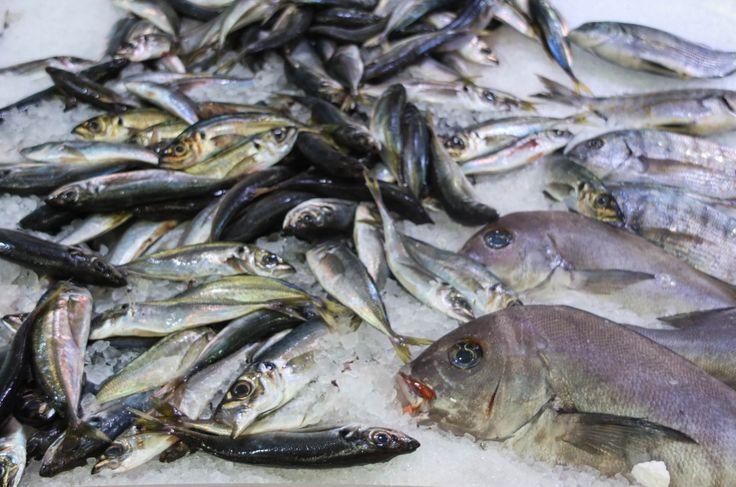 frischer Fisch, Portugal