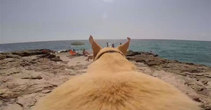 Strapped with a GoPro, Walter the Labrador runs as fast as he can to jump into the water. The video was filmed in Siracusa, Sicily in Italy which is on the coast of the Mediterranean Sea.