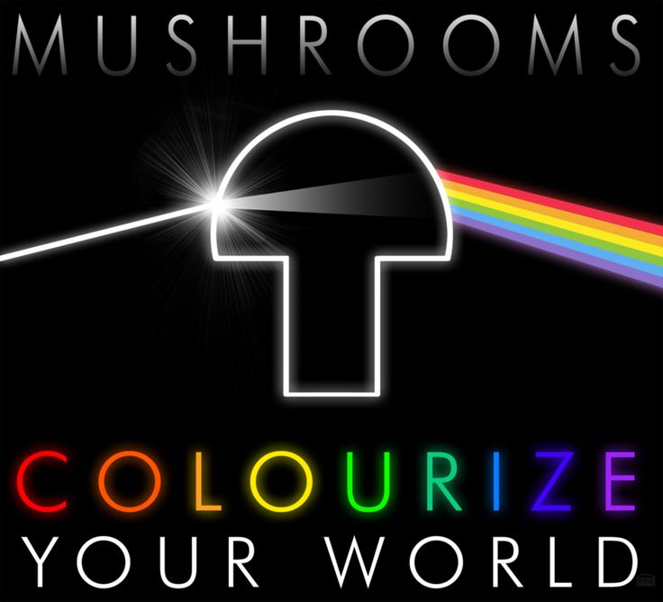 Dark Side of the Shroom #pinkfloyd #mushroom #drugs #High #SUPERHIGH