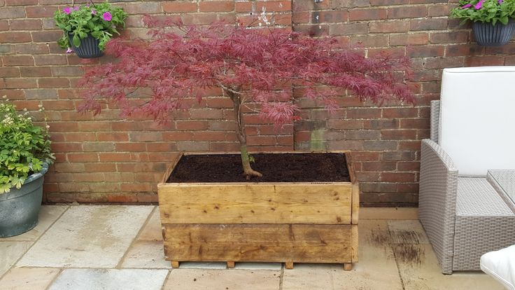 Double stacked scaffold planter created for a Japanese Acer. For my mother in law.