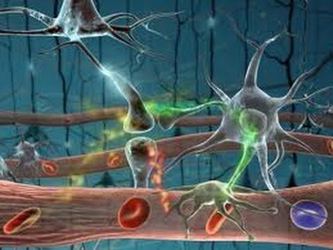 SISTEMA NERVIOSO HUMANO - NEURONA : DOCUMENTAL COMPLETO - YouTube
