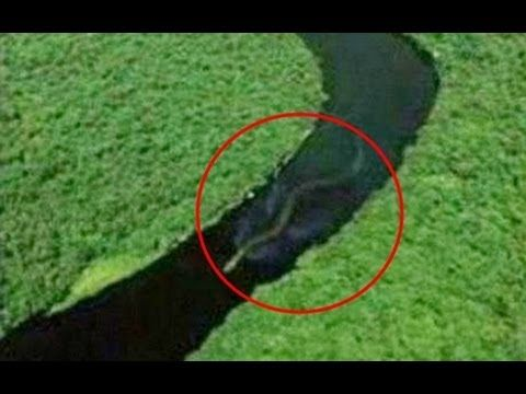 Giant Anaconda Snake 19 meters found in Amazonas - Spotted!