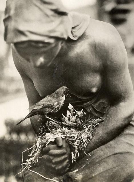 Blackbird's nest in the folded hands of a statue on a graveyard in Berlin, Germany, 1932.Birds Feeders, Cemetery Statues, Birds Nests, Blackbird Nests, New Life, Mothers Nature, Folding Hands, Graveyards, Berlin Germany