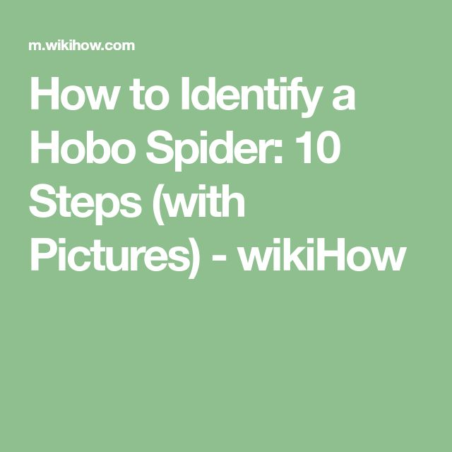 How to Identify a Hobo Spider: 10 Steps (with Pictures) - wikiHow