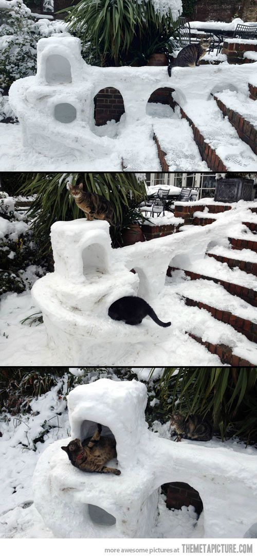 Because cats need snow forts too…