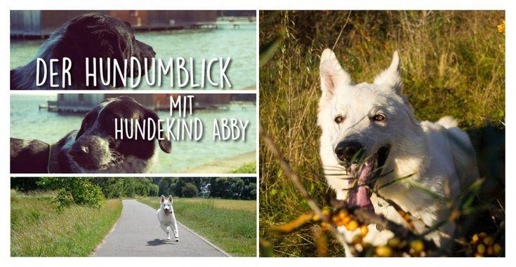 Der Hundumblick: 6 Fragen an Diana von Hundekind Abby