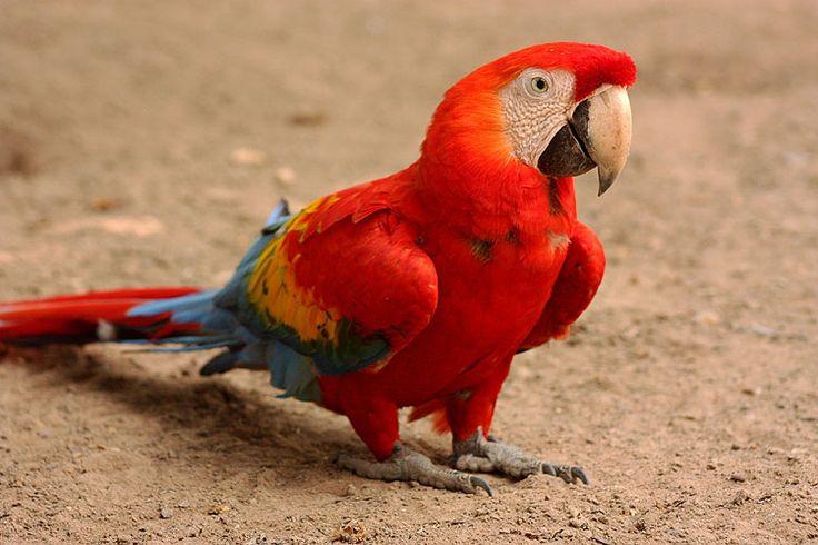 Aves como araras e tucanos podem ser observadas no zoológico de Boa Vista, capital de Roraima MAIS Eduardo Vessoni/UOL