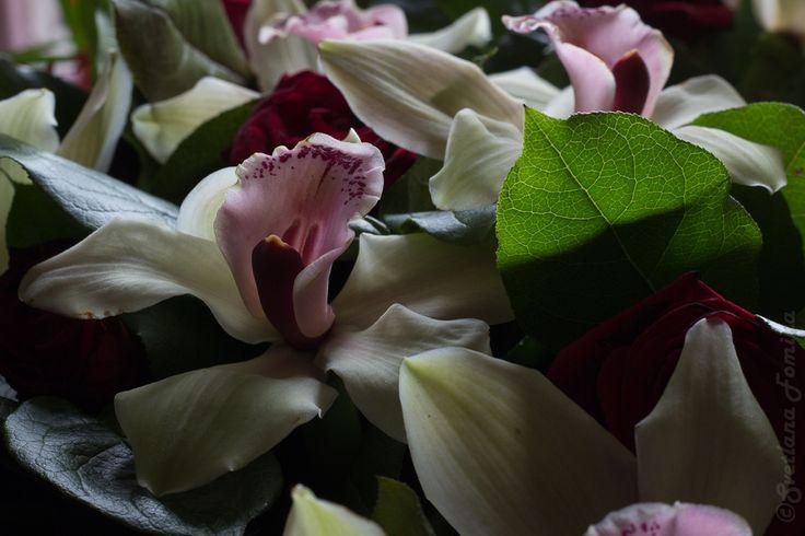 orchids by fominasveta