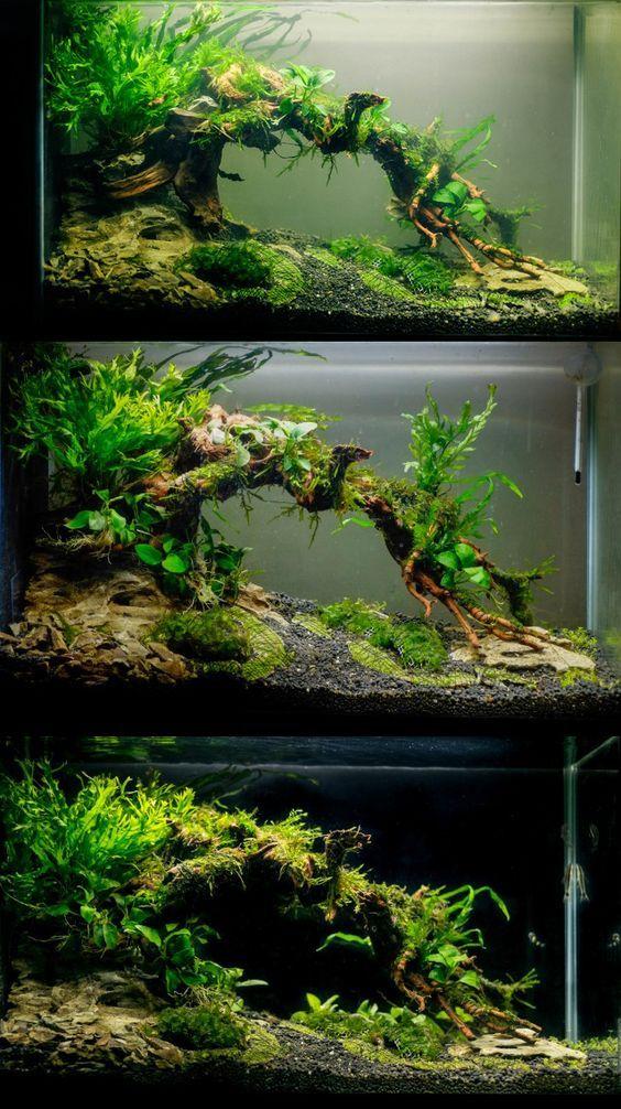 Aquarium ideas planted tank ideas for your aquarium for Freshwater fish tank plants