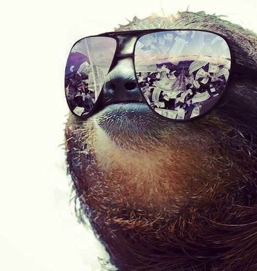 The 25 Greatest Sloths the Internet has ever seen @thekyla Wolf - I can't stop laughing: