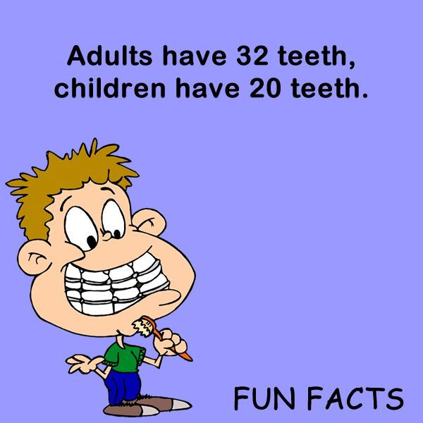 Dental Fact:  adults have 32 teeth, children have 20.