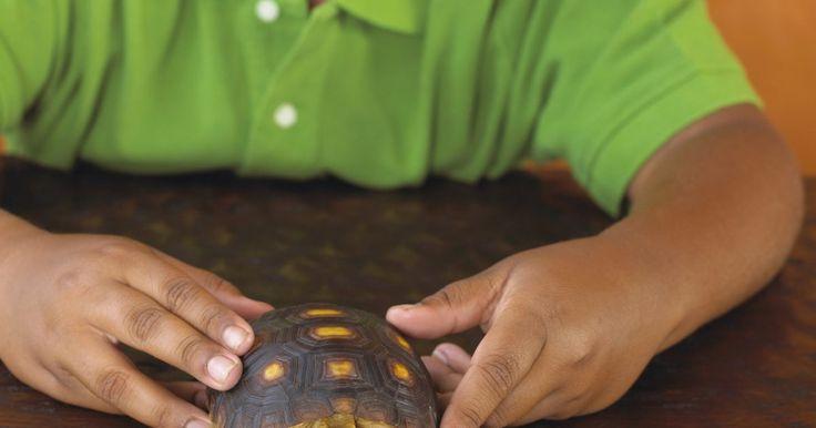 Como eliminar o odor de um aquário de tartaruga . Tanques de tartarugas podem não apresentar o odor característico da mais limpa das gaiolas de pequenos mamíferos, mas também podem ser desagradáveis. Resíduos de tartarugas, mofo e restos de comida produzem odores fortes tanto em viveiros quanto em aquários. Além de serem desagradáveis para o proprietário, esses cheiros indicam que o tanque ...