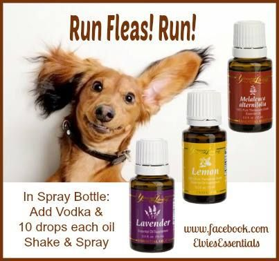 Can You Put Peppermint Oil On A Dog