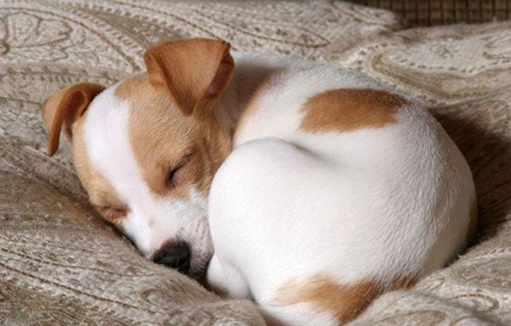 Savez-vous pourquoi les chiens tournent en rond sur eux-mêmes avant de se coucher ? Voici la réponse. – TFI