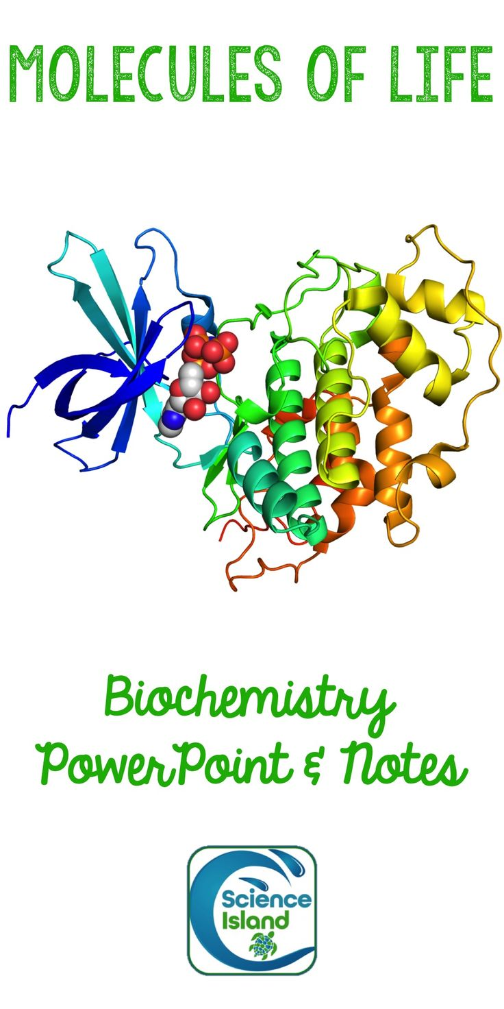 Biochemistry PowerPoint and Notes for Biology relies heavily on images and clear, concise text to introduce your Biology students to organic compounds, monomers and polymers, carbohydrates, lipids, proteins and nucleic acids.