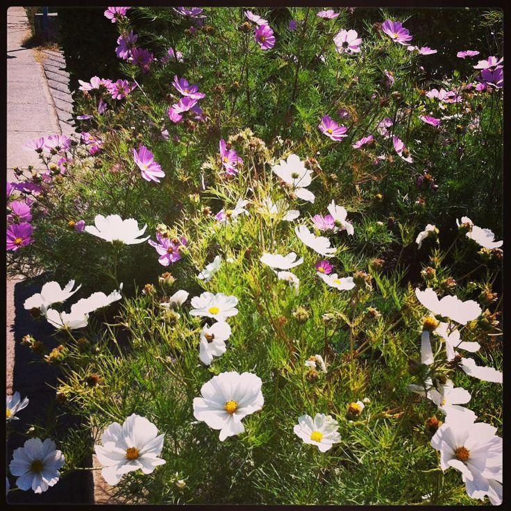 Flores en el camino. Chile.
