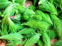 Herkkusuun lautasella-Ruokablogi: Kuusenkerkkäsiirappi, snapsi ja likööri