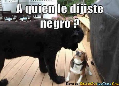 Memes de animales - Imagui