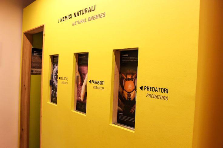 L'#esposizione interattiva di #MMape e le #illustrazioni dei principali #nemici delle #api di #montagna. Visita il Mulino #Museo dell'#ape in #ValdiSole. #TrentinoFamily, #GuestCard.