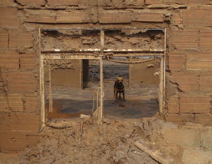 Imagens do mar de lama que deixa rastros de destruição em Mariana, Minas Gerais | Atualidade | EL PAÍS Brasil