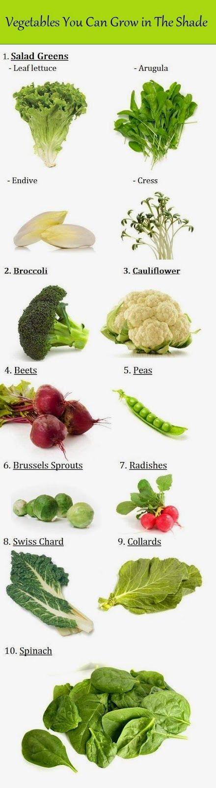 101 Gardening: Vegetables You Can Grow in The Shade